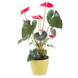 Plantas y Decorativas